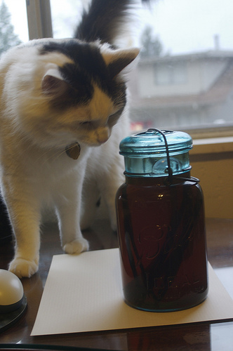 cat sniffing a jar
